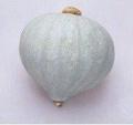日本白色九重栗南瓜種子