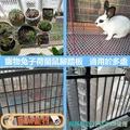 🎀佩佩寵物🎀{現貨 兔用健康踏板}腳踏板 天竺鼠脚墊 兔籠踏板 可裁剪 兔籠專用安全踏板 兔用踏墊 寵物腳踏墊