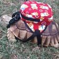 【 月發小舖 】寵物自帶包 買書包送項圈 陸龜 烏龜 蘇卡達  豹龜 陸龜 象龜 紅腿 龜 外出