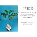 心栽花坊-花旗木/泰國櫻花/開花植物售價80特價70