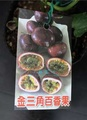 🚚 心栽花坊-金三角百香果/3吋/阡插苗/水果苗/售價180特價150