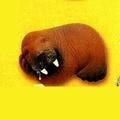不正常玩具 休眠動物園 ZOO T-ARTS 扭蛋 轉蛋 單售 海象 代理現貨 D