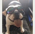 寵物安全帽犬用安全帽寵物頭盔寵物墨鏡