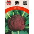 【日本進口蔬菜種子】紫雲紫花椰菜
