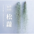 CARMO松蘿T. usneoides 空氣鳳梨(單入) 空鳳【KF088】