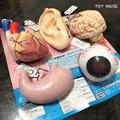 整套販售 絕版 全新 日本 人體器官 眼球 胃 耳朵 心臟 大腦 扭蛋 轉蛋 鑰匙圈 吊飾 內臟
