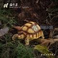 【AC草影】蘇卡達象龜【一隻】