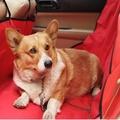 【super舒馬克】歐美熱銷立體包邊加厚款 頂級汽車用後座防水寵物墊 寵物後車防水墊