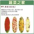 【蔬菜之家】大包裝H11.蜀葵(混合色,高150cm)種子10公克(約570顆)