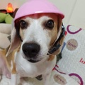 寵物安全帽
