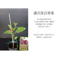 🚚 心栽花坊-滿天星百香果(苗)售價100特價80