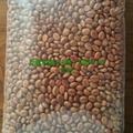 花旗木種子,100粒×3元=300元