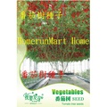ZEA番茄樹種子6粒樹番茄種子 樹狀蕃茄種子 黃番茄樹種子 紅櫻桃番茄樹種子 黑番茄樹種子 紫番茄樹種子 奇特蘭花種子