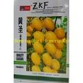 ZKF黃聖櫻桃番茄種子大包裝買十送一  黑鑽石番茄黑番茄 長生果番茄 紅聖櫻桃番茄紅聖女果 紅色大番茄種子蔬菜水果種子