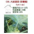【蔬菜工坊】C08.大結頭菜種子(約一般傳統結頭菜2-3倍大)