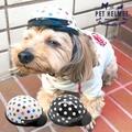 供供供供寵物安全帽寵物配飾點水滴小型狗使用的狗使用的貓使用的帽子小安全帽狗使用的安全帽小型狗寵物用品動物ANIMALHELMET小事安全帽禮物生日 lipcrown