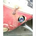 後照鏡白鐵鍍鈦螺絲 M8正牙後照鏡用 一組價格 鍍鈦內六角正牙螺絲 VJR 125 GP JR MANY