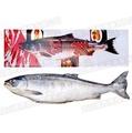 北海道特選紅鮭魚(越渡-秋鮭L)新卷鮭~日式冷凍生鮮食材系列!