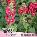 蜀葵種子~Hollyhock(一丈紅)