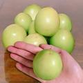 水果達人 頂級鮮採甜蜜燕巢牛奶蜜棗(5斤/箱)