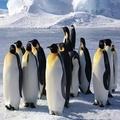 【Jo醬紙玩-】1000片拼圖/企鵝家族1(交換禮物1000片拼圖春節聚會活動)