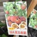一禪種苗園-水果苗<滿天星百香果-嫁接苗> 4.5吋盆
