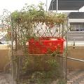 【峰.魚菜】87*87cm魚菜共生虹吸鐘套組,水耕蔬菜箱,含馬達水管跟上部菜箱-售價:1,850元(不含架子).