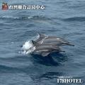 【蘭陽鯨典】三合一烏石港賞鯨(登龜山島+繞島+賞鯨) 兒童票 999(約4小時)代客預約
