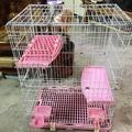 (二手)自取雙層貓籠