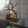二手寵物籠
