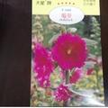 農用711 蜀葵 蜀葵種子 花卉種子