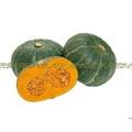 【優良蔬菜種子】大佛栗南瓜~驚異的肥大力! 2KG以上,栗子南瓜大果級的經濟品種