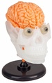 Smartlab Toys The Amazing Squishy Brain