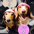 現貨 寵物安全帽 兜風必備 寵物 安全帽 機車 外出 帽子 造型安全帽 臘腸狗