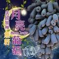 【揪揪購】5盒美國加州無籽月亮葡萄(500公克±10%/盒)