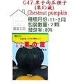 【蔬菜工坊】G47.栗子南瓜種子(栗藏)