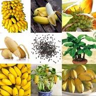 100 Pcs หายาก Dwarf กล้วยเมล็ดบอนไซเล็ก SEED Exotic โรงเรือนสวน
