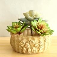 Rhd Coarse Pottery Succulent Planter Succulent Planter Pot Ceramic Succulent Pot