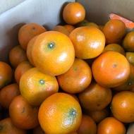 佛利蒙柑(當季水果)
