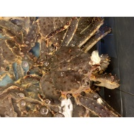 Live Alaskan King Crab (5 sizes to choose from)