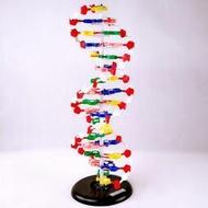 【新品快報】免運搶先買33306DNA雙螺旋結構模型帶底座可旋轉60cm遺傳基因生物實驗器材 露天拍賣