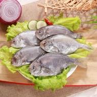【海之金】現撈肉魚/肉鯽仔4包(500g/包,六尾)