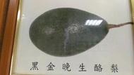 黑金酪梨 嫁接苗 以及各種最新品種酪梨嫁接苗 0972-818-052