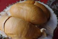 Anak Pokok Durian Duri Hitam 100% Hybrid (Black Torn)