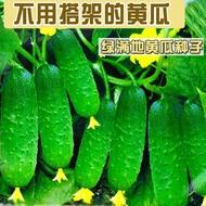 本土出貨☞熱銷款♥四季播種水果黃瓜節節瓜高產小黃瓜地載陽臺盆栽菜籽農家蔬菜種子▶速生 包對版◀