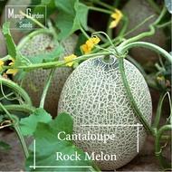 Rock Melon Seeds - 10 Seed *Pot Friendly* Cantaloupe Sweet Melon - Mango Garden