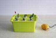 ★訂製★ 風靡全球 新式種植蔬菜水果法 魚菜共生 水培水耕 水箱 附蓋子 6孔 水族箱 營養液儲存