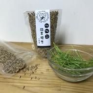 斑馬與狗嚴選貓草種子 【小麥草種子】 小麥 大麥 燕麥 黑燕麥 貓草 天然化毛膏
