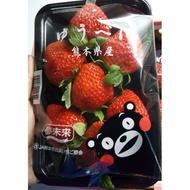 日本草莓 熊本草莓 最頂級的草莓