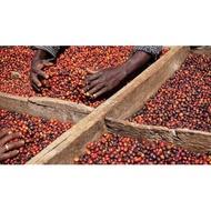 衣索比亞 耶加雪菲 沃卡 薩卡羅村 水洗 G1